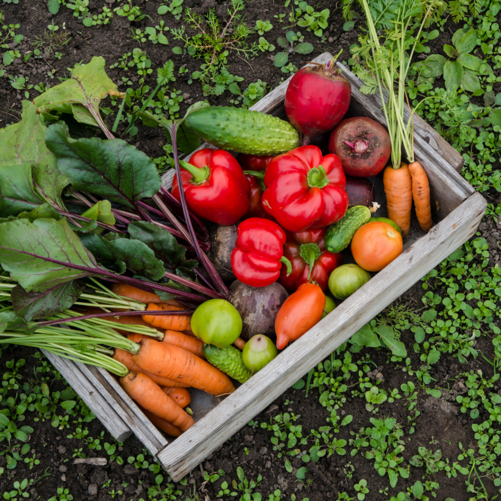 vegetable garden harvest picture